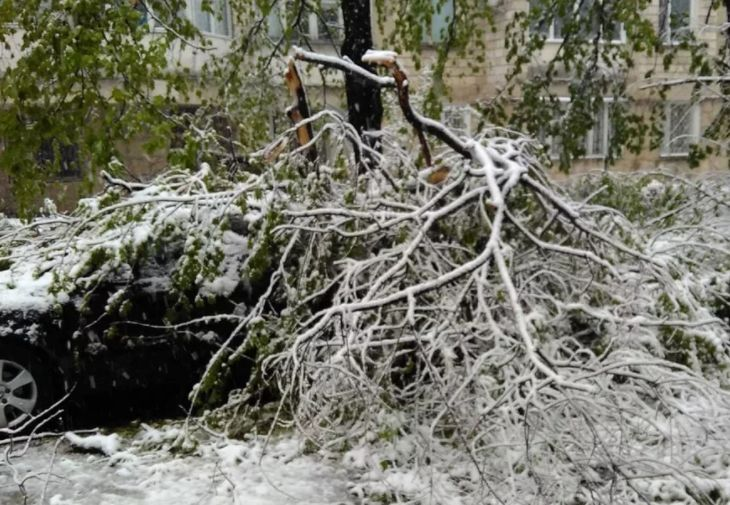 сломанные ветви